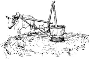traditional press :Wood Pressed Oil,chekku oil, marachekku ennai, cold pressed oil, marachekku oil, chekku ennai,chekku oil in Chennai,buy online in chennai,Buy Cold Pressed Oil,Cold Pressed